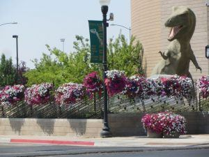 Flowers in Front of the Dinosaur Museum